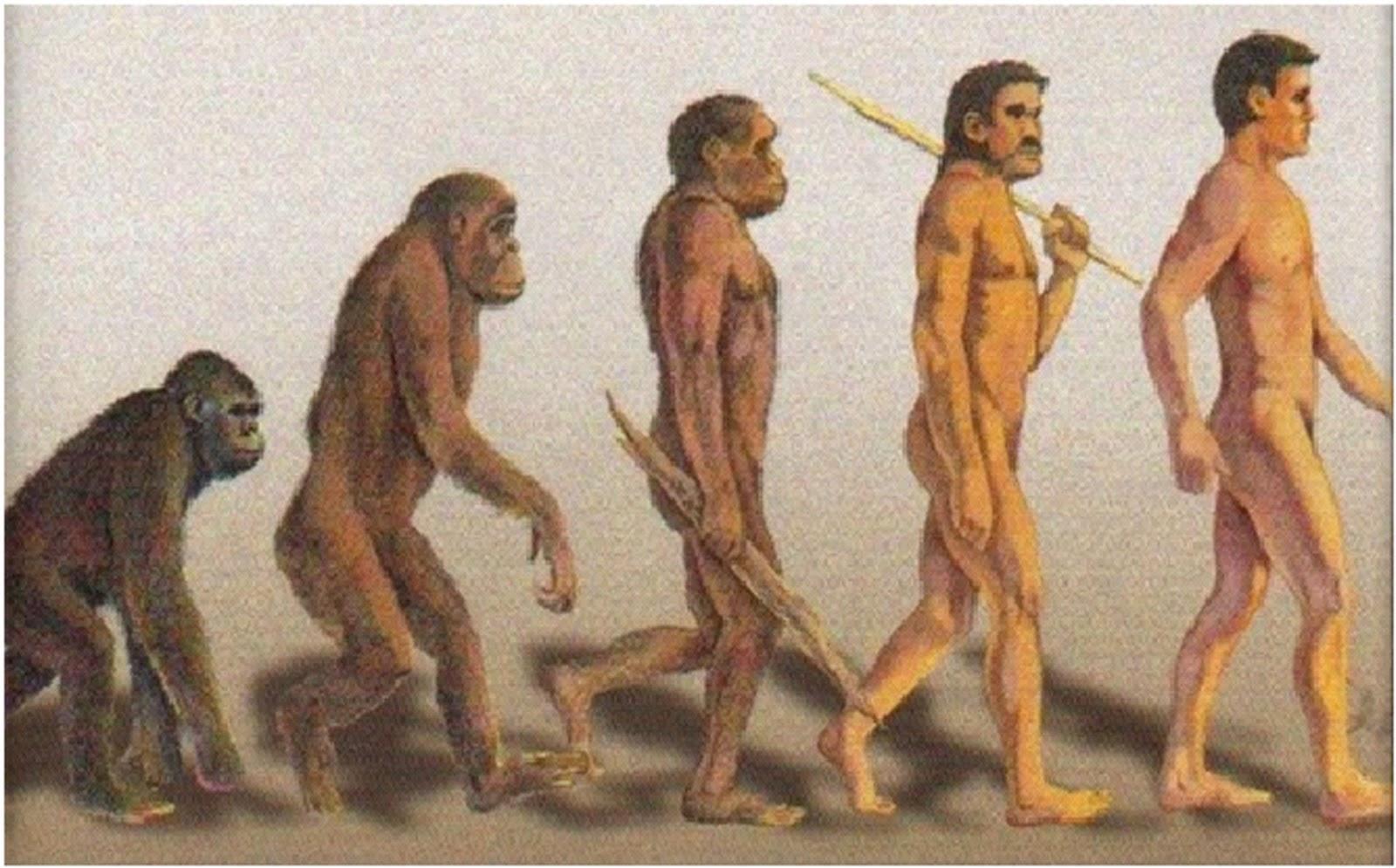 Ученые выяснили, что мутация помогла человеку встать на ноги.